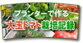 プランターで作る大玉トマト栽培記録