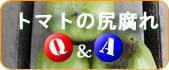 トマトの尻腐れQ&A集